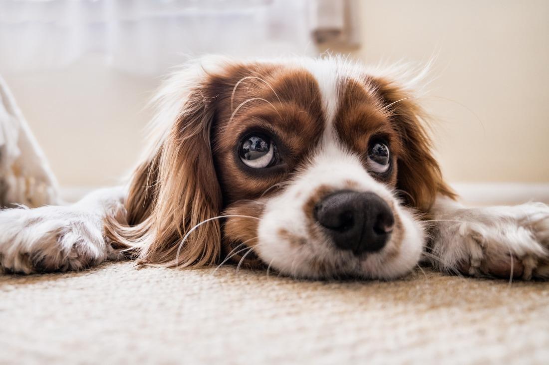 dog-2785074_1920
